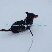 Dog Wonder: Santa Fe, NM