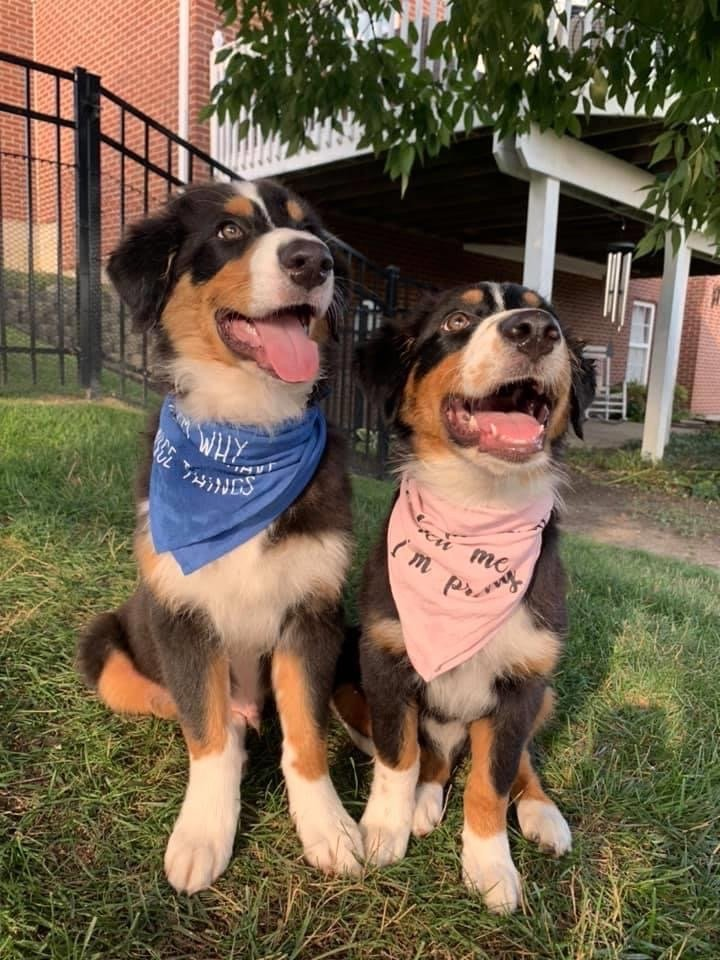 Camden Veterinary Service: 8555 Dillman Rd, Camden, OH