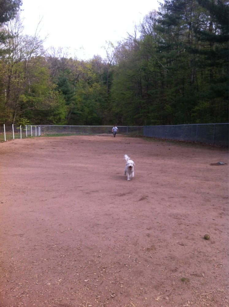 Fenced Dog Parks In Ma