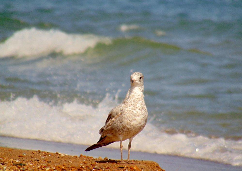 Whihala Beach: Whiting, IN