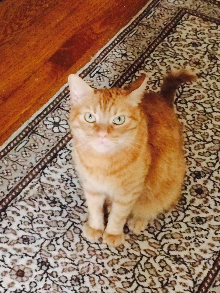 Kitty Cuddle: Houston, TX