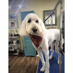Cute cuts 13 photos 15 reviews pet groomers 1011 se walnut photo of cute cuts hillsboro or united states solutioingenieria Images