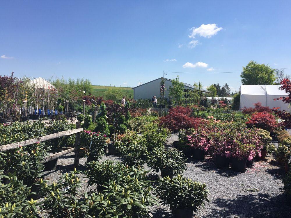 Conestoga Nursery: 310 Reading Rd, East Earl, PA