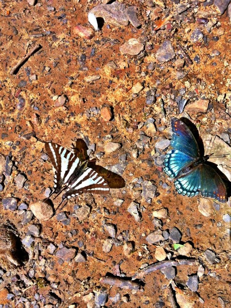 Cedar Falls Trail: 1001-1067 Petit Jean Mountain Rd, Morrilton, AR