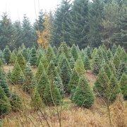 Redland Landing Christmas Tree Farm - Christmas Trees - 19400 S ...