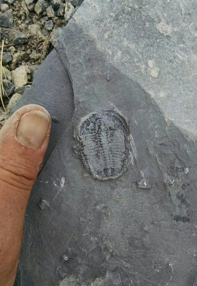 Trilobyte Me! Quarry Fossil Fee Dig: Delta, UT