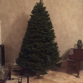 Photo of Pinery Christmas Trees - Escondido, CA, United States. On Saturday, - Pinery Christmas Trees - 14 Photos & 13 Reviews - Christmas Trees