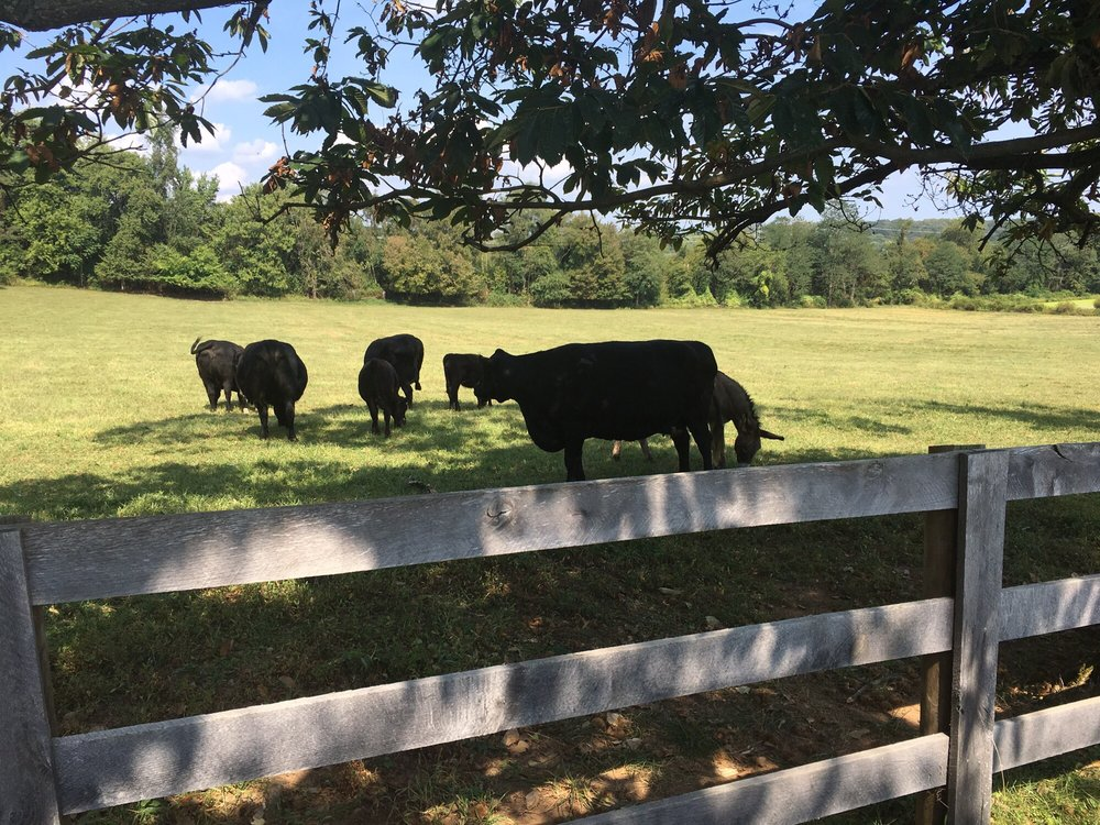 Kingsbury's Orchard: 19415 Peach Tree Rd, Dickerson, MD