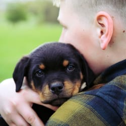 Gt Rottweilers Closed Pet Services Portland Or Phone Number