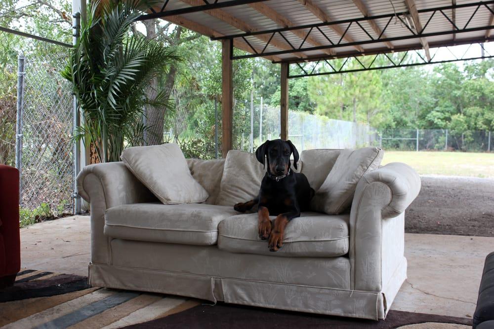 Dogmata: 112 Mosley Dr, Lynn Haven, FL