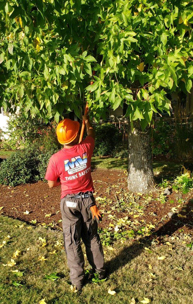 Mountain View Tree Service: 2485 Silverton Rd NE, Salem, OR