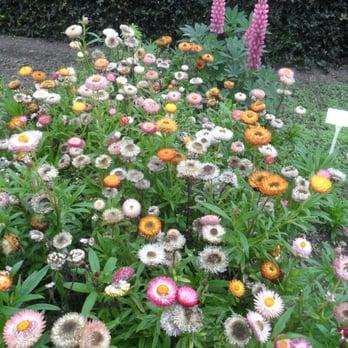 Photo Of National Botanic Gardens   Glasnevin, Co. Dublin, Republic Of  Ireland.