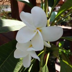 Armstrong Garden Centers 84 Photos 40 Reviews Nurseries
