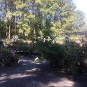 Office And Photo Of King S Greenhouse Stallings Nc United States A Little Bit