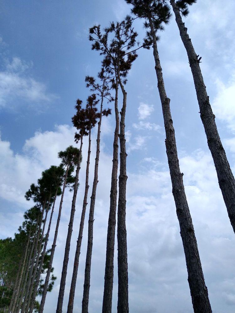 Ron's Quality Tree Service: Christmas, FL