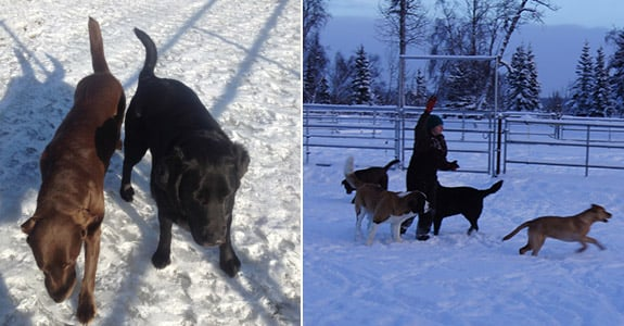 Cooper's Wounded Bear Farm And Kennels: 27982 Kalifornsky Beach Rd Mile 45, Kasilof, AK