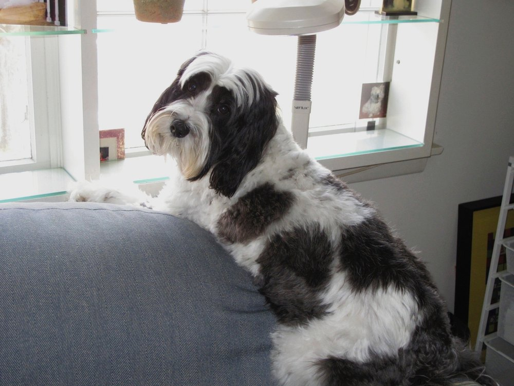 The Pampered Pooch: 257 E Putnam Ave, Cos Cob, CT