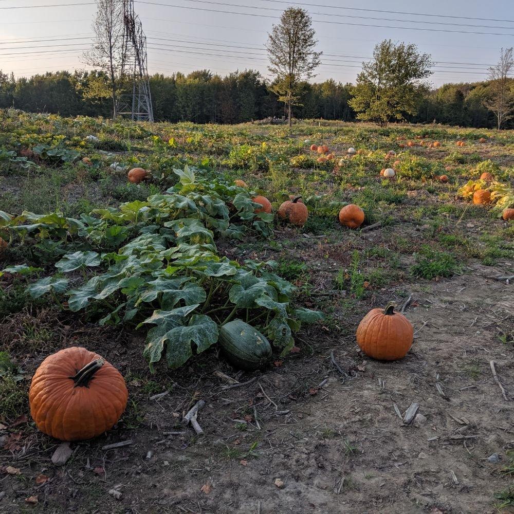 Ransom Sage Farm: 505 Center St, Chardon, OH