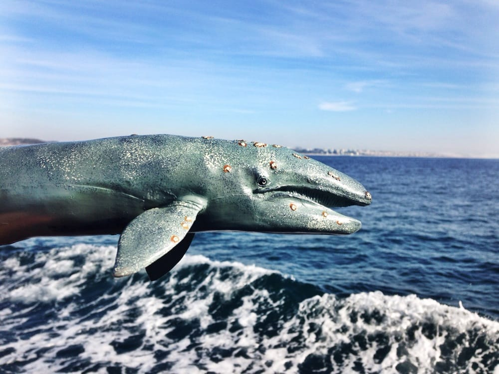 Fake whale watching yelp for Marina del rey fishing report