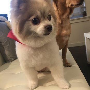 Happy Dog Grooming - 272 Photos & 42 Reviews - Pet ... - photo#50
