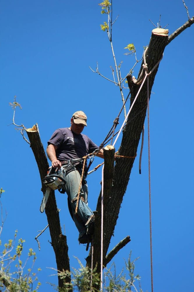 Valley Tree Experts: Hellertown, PA