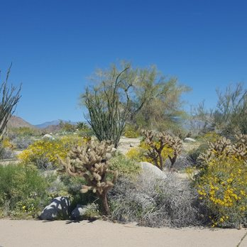 Anza borrego desert state park 1143 photos 191 reviews parks anza borrego desert state park 1143 photos 191 reviews parks 200 palm canyon dr borrego springs ca phone number yelp mightylinksfo Images