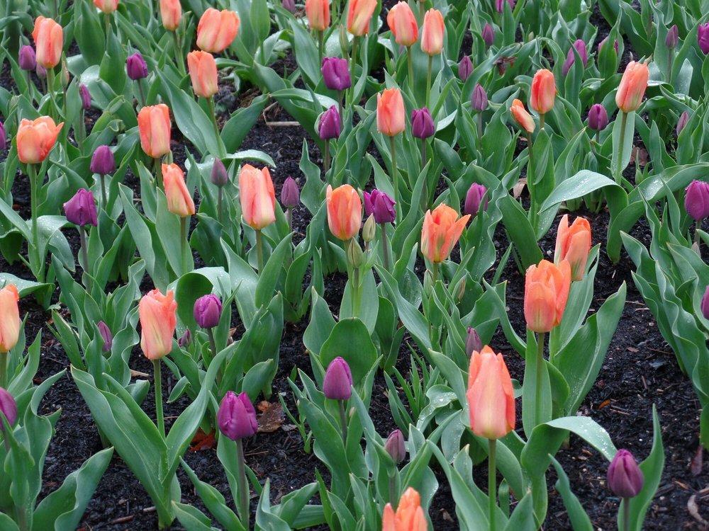 Inniswood Metro Garden: 940 S Hempstead Rd, Westerville, OH