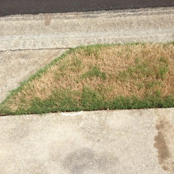 Top Turf Lawn Care And Pest Management 58 Photos Amp 68