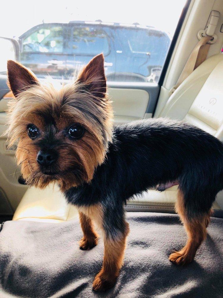 Hair Of The Dog Pet Grooming: 61 Magnolia Cove Rd NE, Ludowici, GA