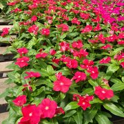 Great Photo Of Frank Otte Nursery U0026 Garden Center   Louisville, KY, United States.