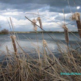 Rancho seco recreational area 83 photos 38 reviews for Rancho seco fishing