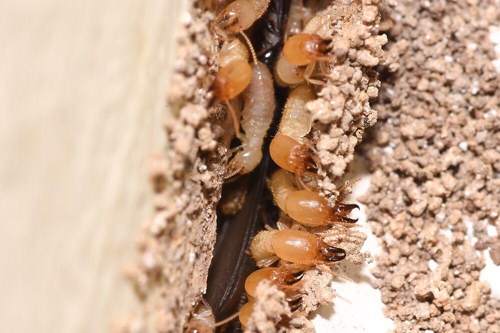 Ocal Pest Control: 30 S 1st St, Banning, CA