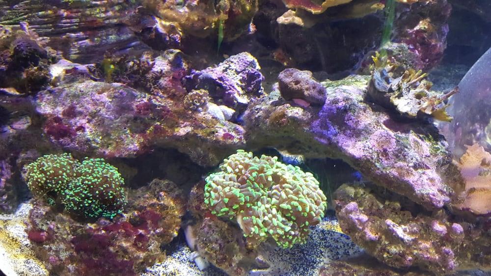 Photos For Sea Life Arizona Aquarium Yelp