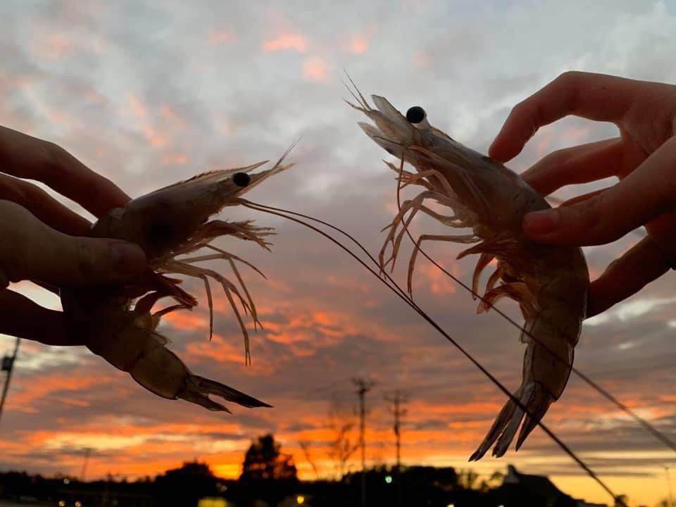 Outerbanks Seafood: 1974 Live Oak St, Beaufort, NC