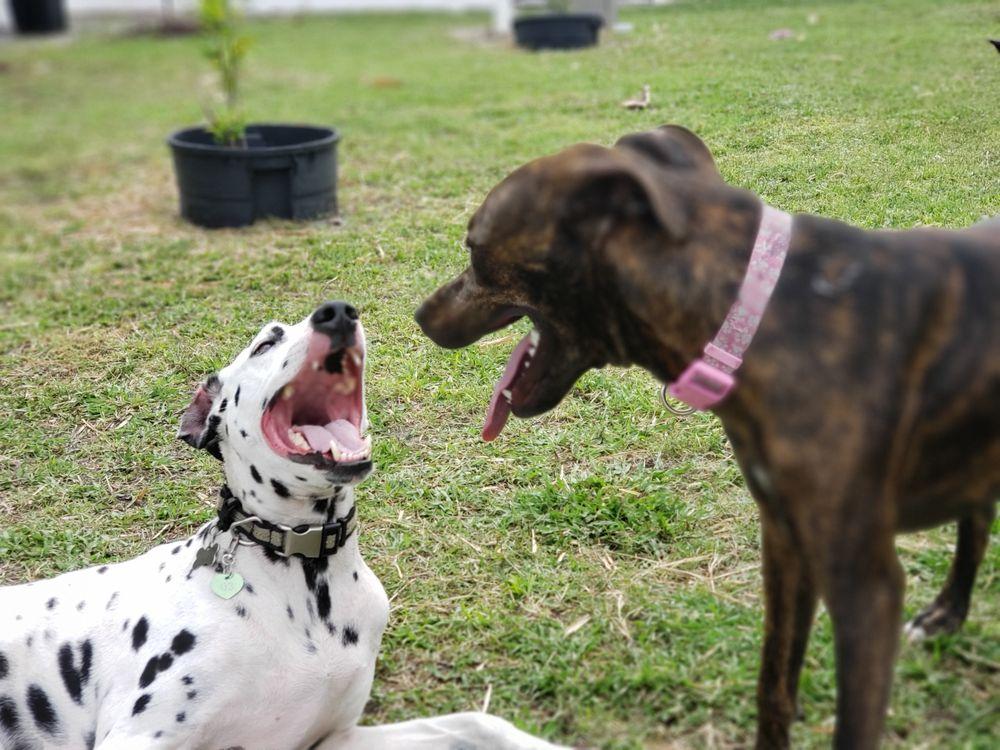 Gulf Coast Pet Resort: 2817 68th St W, Lehigh Acres, FL