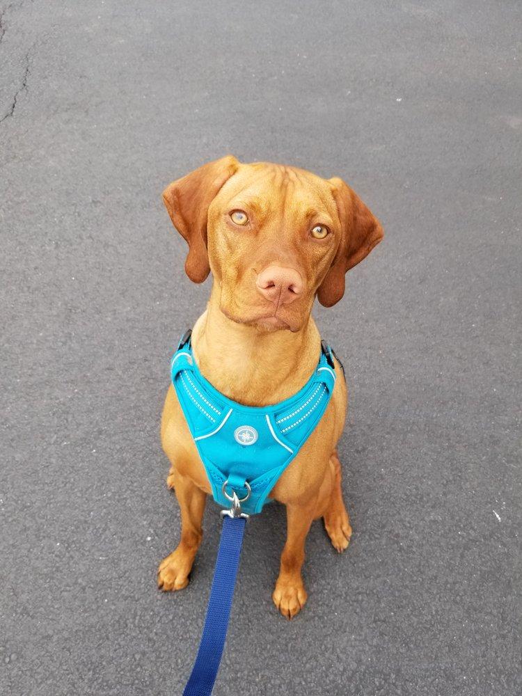 BRAVE Dog Training