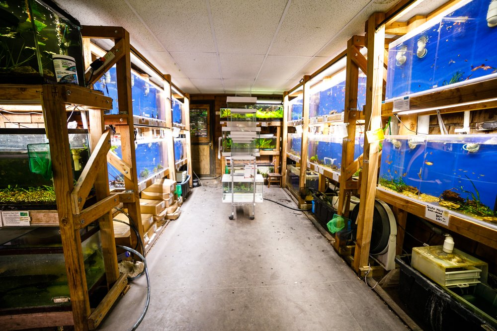 Albany Aquarium: 818 San Pablo Ave, Albany, CA