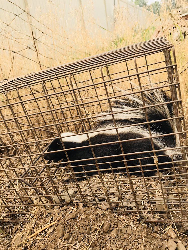 Panhandle Critter Gitter: Hayden, ID
