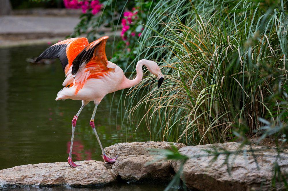 Social Spots from Reid Park Zoo