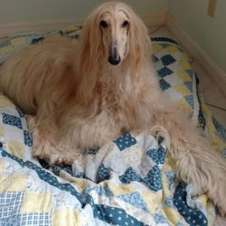 Aleta's Pampered Pooch Mobile Dog & Horse Grooming - 64