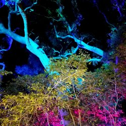 Enchanted Forest Of Light At Descanso Gardens Temp Closed 198 Photos 40 Reviews Local