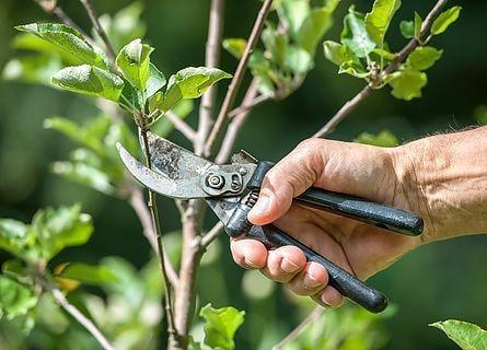 Zielinski's Tree Services: W9551 W24th Rd, Pound, WI