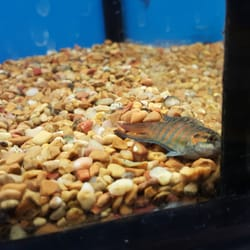 Petco 55 photos 131 reviews pet shops 1150 el for How much are fish at petco