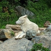 International Wolf Center - 45 Photos & 14 Reviews - Museums - 1396