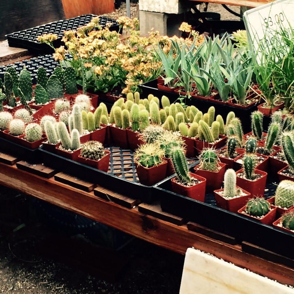 Moorten Botanical Garden 195 Photos Botanical Garden Palm Springs Ca United States