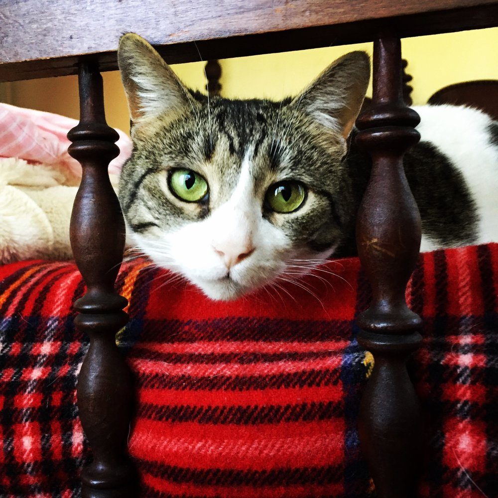 The Country Inn For Cats: 1121 Satsop Rd W, Montesano, WA