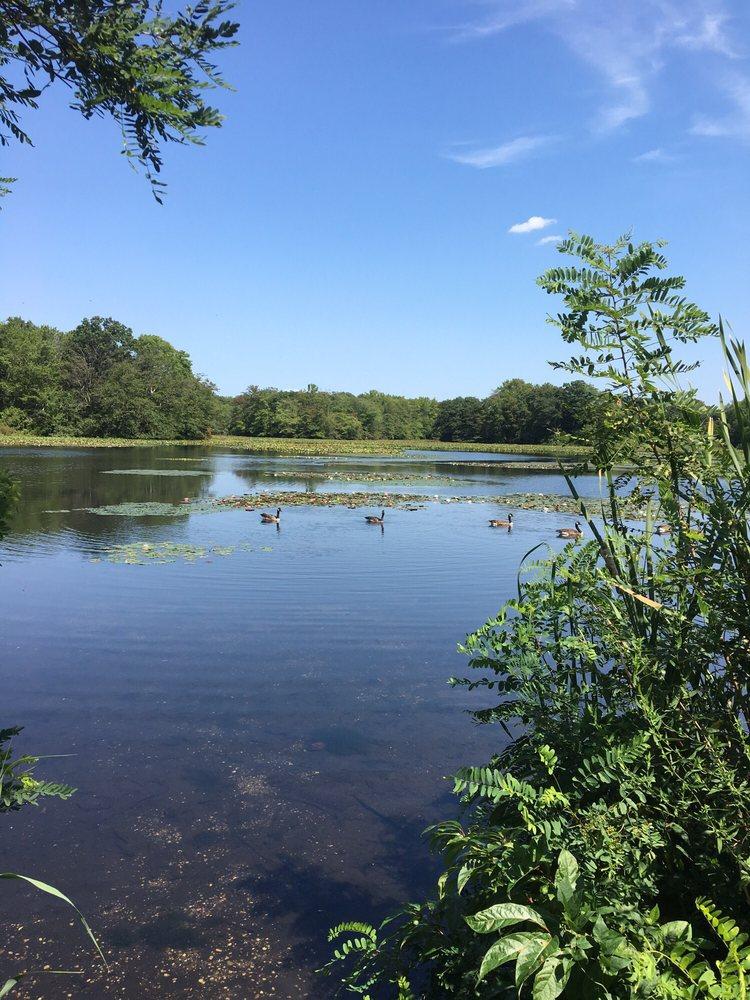 Bellmore Pond: Merrick Rd, Bellmore, NY