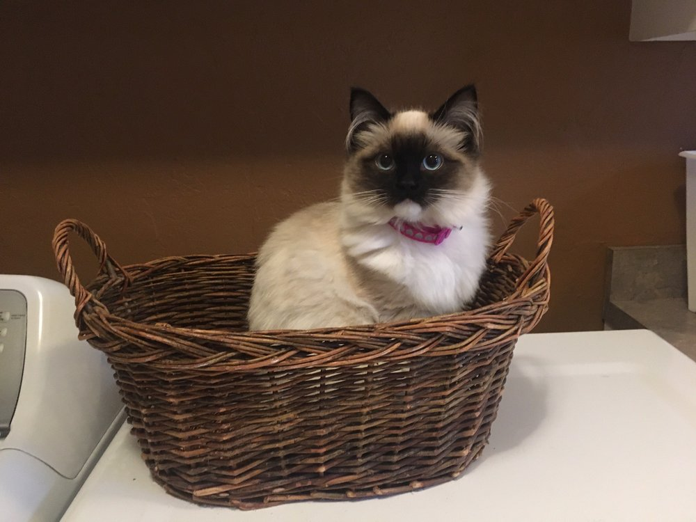 A Ragdoll To Love: Cherry St, Highspire, PA
