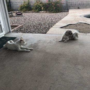 Halo Dog Rescue Phoenix Az