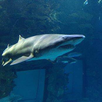 Shark Reef Aquarium - 1719 Photos & 673 Reviews ...